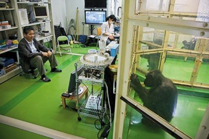 Chimps-Ai-Ayumu-in-lab-4.jpg__600x0_q85_upscale