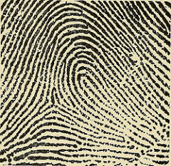 fingerprint (public domain)