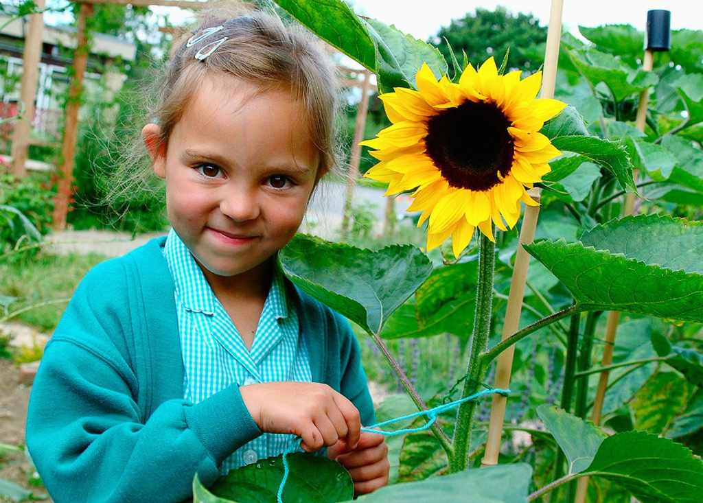 School pupil with a sunflower in a school garden
