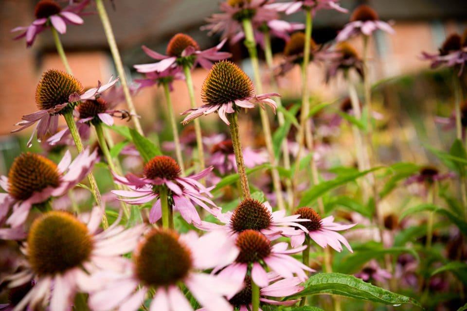 Beautiful flowers in The Walled Garden at Cowdray Fiona Jones wedding photographer