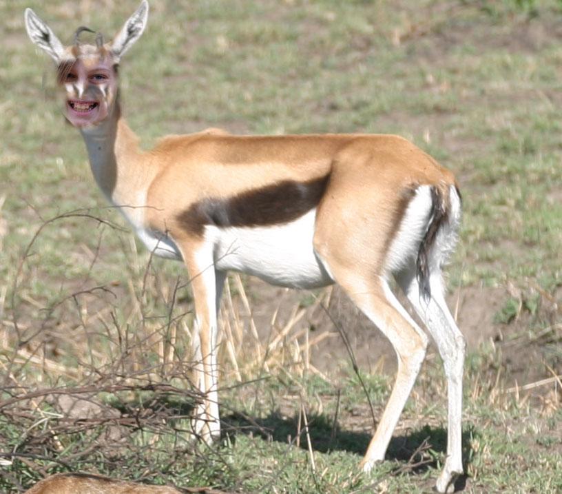 grace-the-gazelle1
