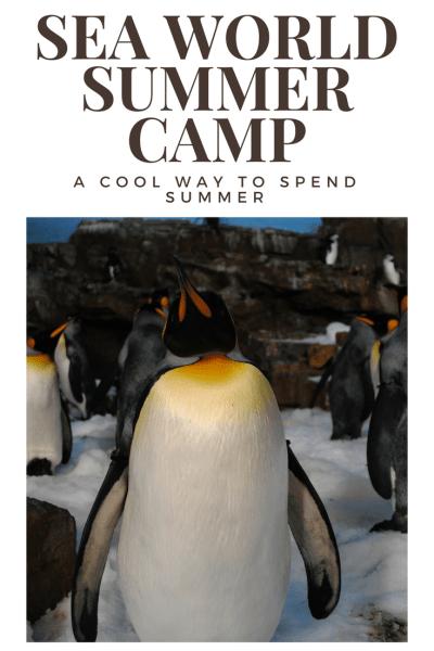 Kids Make a Splash at SeaWorld Summer Camp