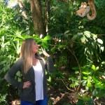 Disney's Animal Kingdom now offers exotic PhotoPass Magic Shots in their Orlando theme park.