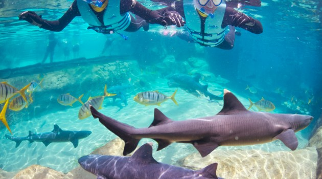 Guests Can Swim with Sharks at Discovery Cove in Orlando
