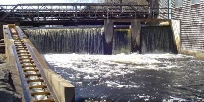 Elm Street dam, April 2007