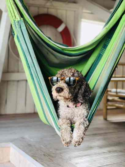 Passive investing hammock dog chill