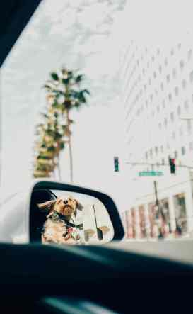 dog rearviewmirror