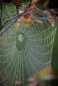 dew on a spiderweb