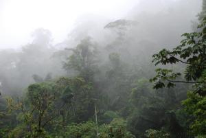 jungle in fog