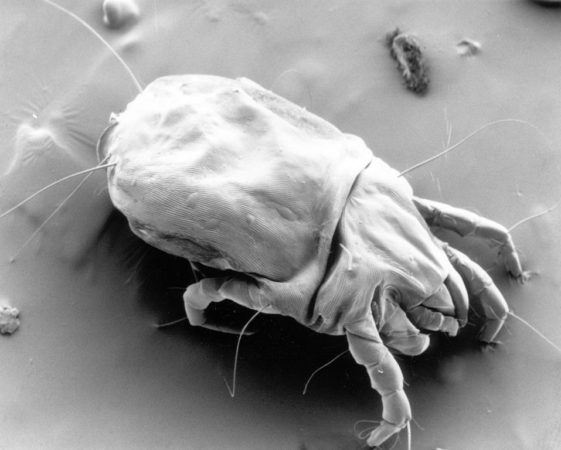 13 Tips That Will Cleanse Your Mattress of Dust Mites