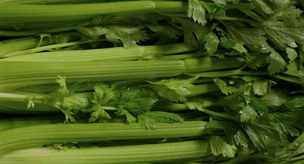 The Medical Medium and the Celery Juice Craze
