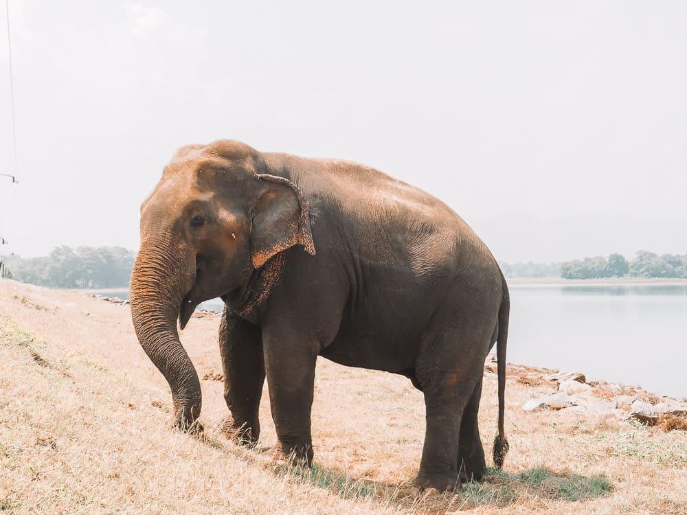 udawalawe safari, udawalawe safari tour, udawalawe national park, udawalawe, uda walawe, udawalawe safari price, udawalawe accommodation, sri lanka safari, udawalawe national park accommodation, udawalawe national park jeep safari