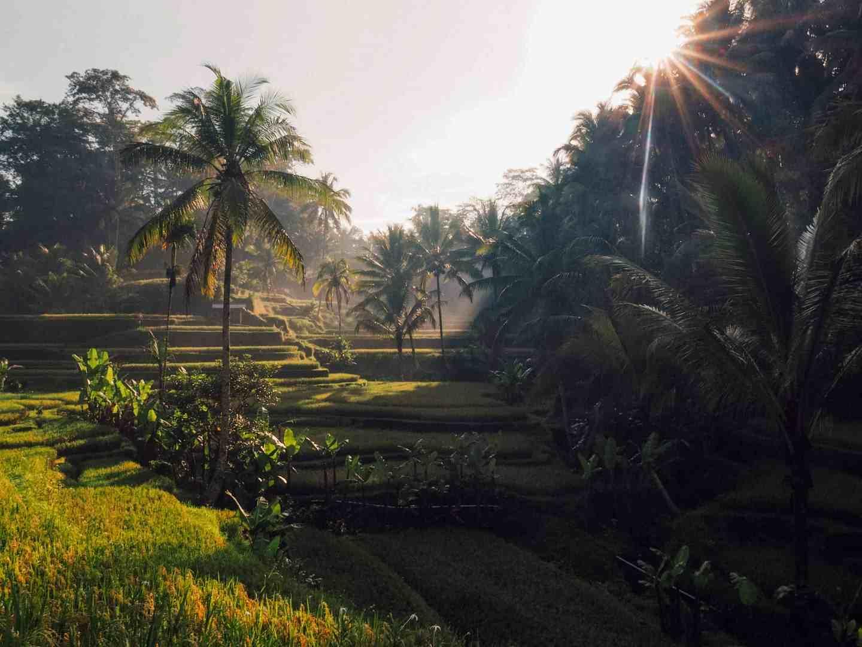 tegallalang rice terraces 4