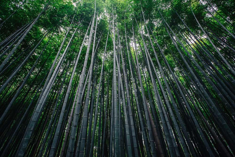 kyoto itinerary 4