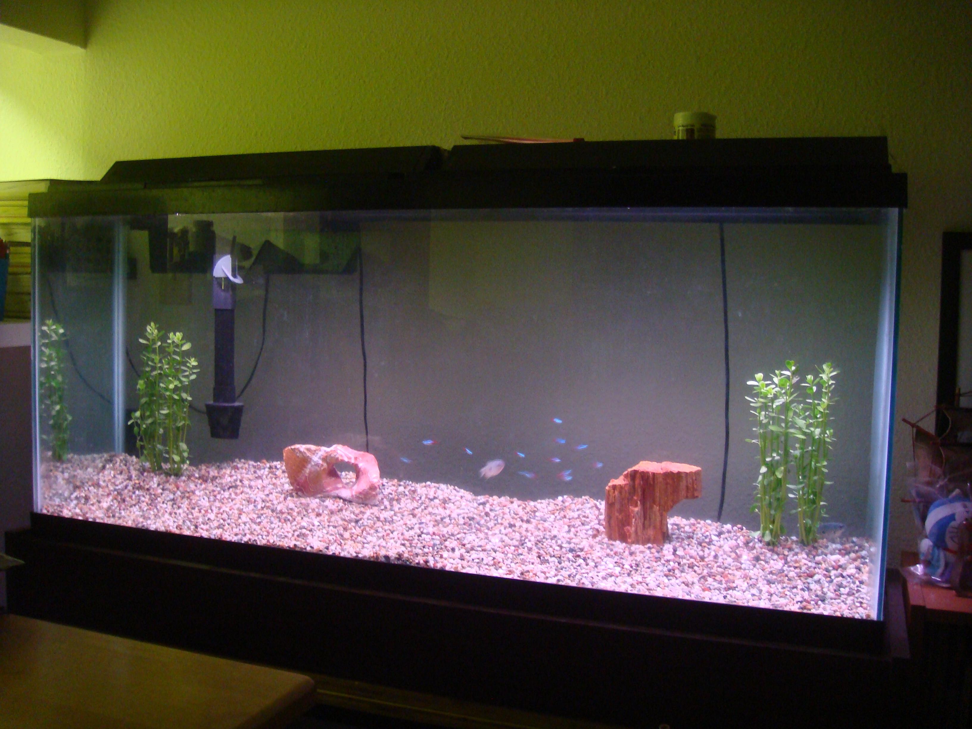 My 55 Gallon Fish Tank Jon Riki Karamatsu