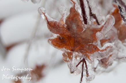 Ice Trees (1 of 15)