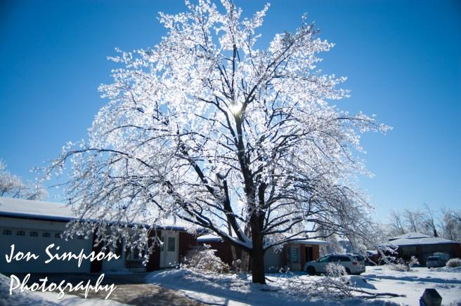 Ice Trees (15 of 15)
