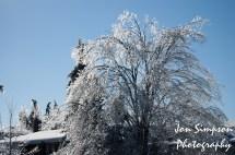 Ice Trees (3 of 15)