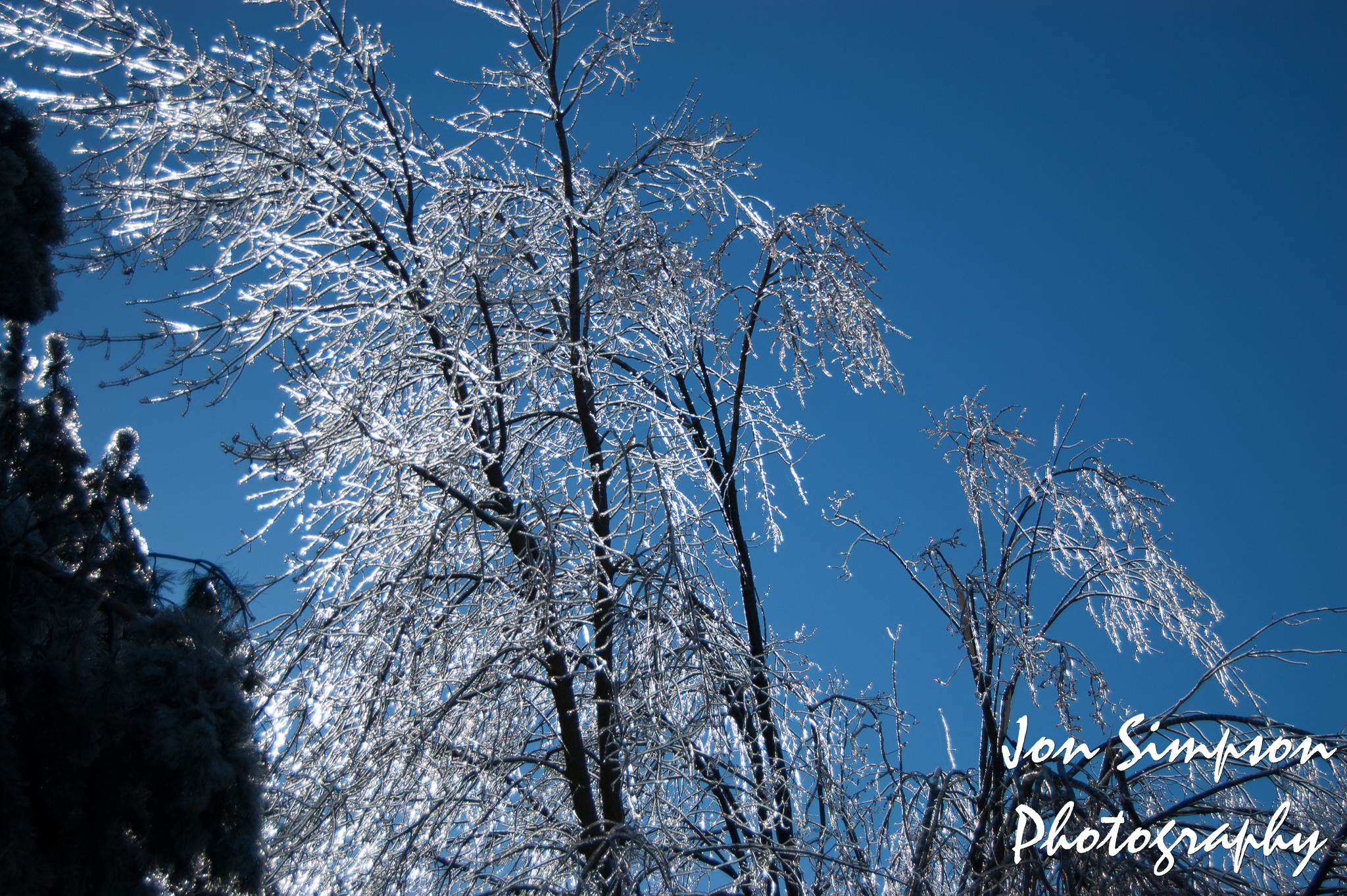 Ice Trees (6 of 15)