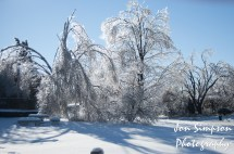 Ice Trees (7 of 15)