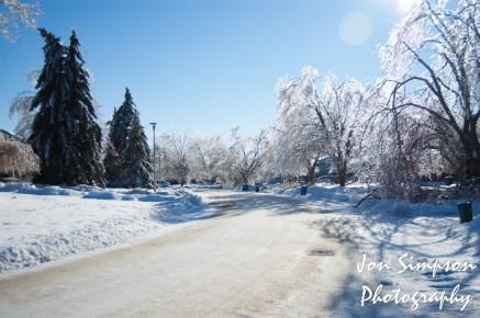 Ice Trees (9 of 15)