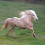 Free Photo Running Horse Animal Field Grass Free Download Jooinn