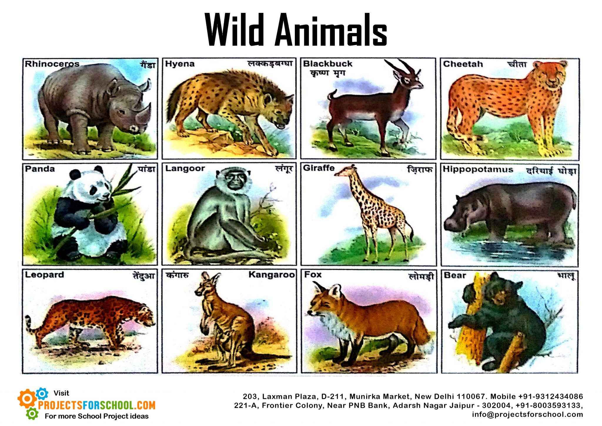 Free Photo Wild Animal