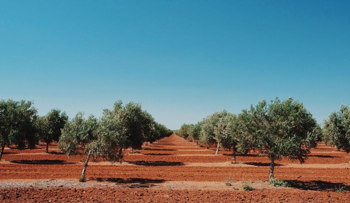 Road trip en Andalousie : Itinéraire, infos et organisation