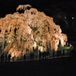 福島市の夜景5選│近くも遠くもどちらも楽しい良スポット