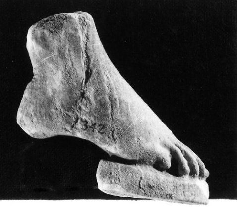 Greek foot from the Elgin Marbles