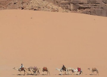 wadi rum Camel ride (3)