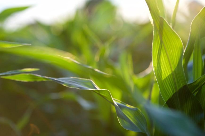 lancaster-pa-commercial-agricultural-farm-photographer-jordan-bush-photography-14 Agriculture