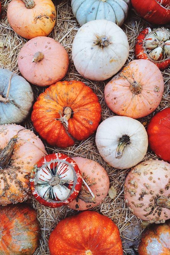 october mood board pumpkin patch