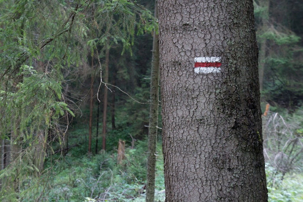 There are handy trail markers painted about if you have trouble following the trail