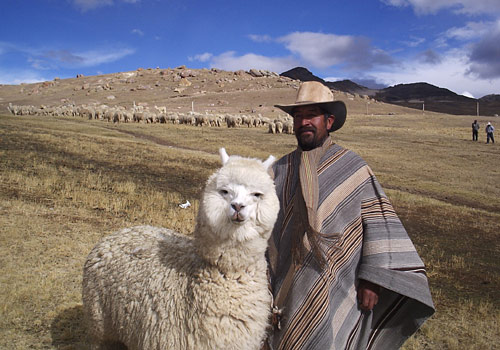 A photo of an alpaca standing next to a man in Bolivia
