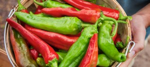 A plate of red and green chiles