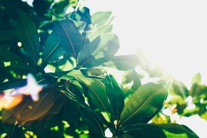 Beautiful green plant with sunlight shining from corner of screen. if you're struggling with infertility, therapy for infertility could help you. Laura Jordan is caring therapist who wants to help you feel better.