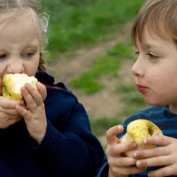 Køb økologisk: Rester af sprøjtegift i hvert andet stykke frugt