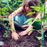 Lad børnene dyrke grøntsager i deres egen køkkenhave