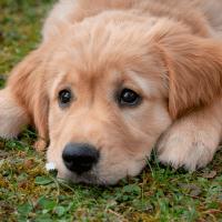 Forældet lov skyld i at hunde og katte skydes