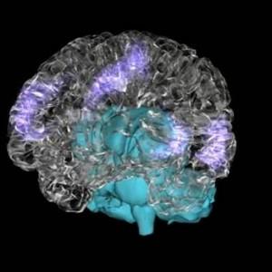 Los músicos mantienen una mejor conectividad cerebral aún en estado de reposo