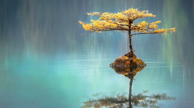Tu árbol De La Libertad