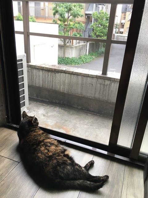 Oobie on Balcony in Tokyo. Photo Credit: Susan Spann