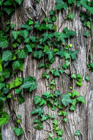 Photo Credit: Unsplash Photographer Sugar Bee. (Creative Commons Zero)