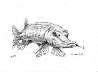 Cool (Fleisch / Fisch) (Bleistift)