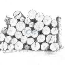 Holz 1 (Bleistift)