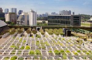 Novo grupo de estudos do IEA irá pesquisar agricultura urbana em São Paulo