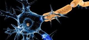 No Ano da Ciência da Wikipédia, núcleo da USP atualiza verbetes sobre teoria do cérebro