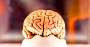 Nova área da matemática pode ajudar a desvendar o cérebro