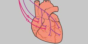 Exercícios podem evitar e até reverter perda de neurônios ligados ao coração